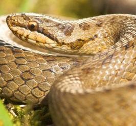 Studiedag gladde slang - een terugblik