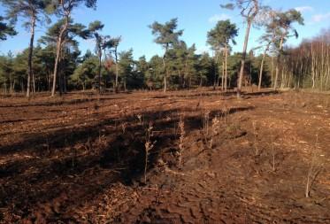 duizenden jonge boompjes voor natuurherstel