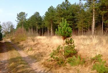 Heidecorridor tussen Blekerheide en Riebos