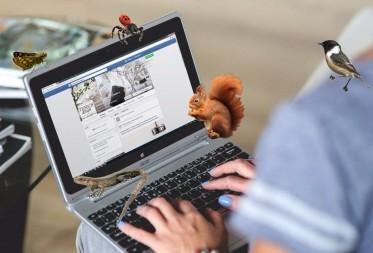 Facebookwedstrijd Bosland en Lommel