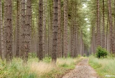 Omvorming homogene naaldbossen naar natuurlijke bossen