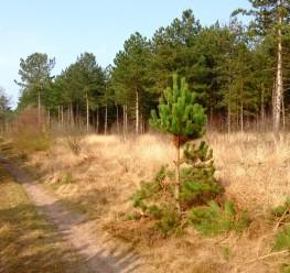 Voorbeeld van een brede, grillige bosrand