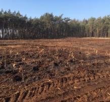 Omvorming naaldbos naar natuurlijke bossen